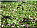 SP8809 : Mole Hills in the grass in Wendover Woods by Chris Reynolds