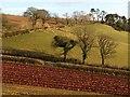 SX8561 : Partly ploughed field by Higher Ramshill Lane (3) by Derek Harper