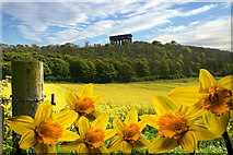 NZ3354 : Penshaw Monument by Paul Robson