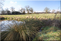 TL8063 : Farmland at Little Saxham by Bob Jones