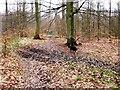 SP9208 : Old Cart Track through High Scrubs Wood by Chris Reynolds