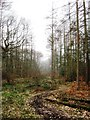 SP9208 : The Entrance to the Larch Plantation by Chris Reynolds