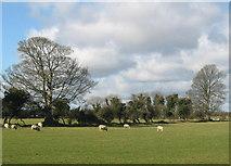 O1566 : Gormanston, Co. Meath by Kieran Campbell