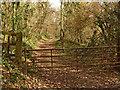 ST2232 : Track on Rose Hill by Ken Grainger