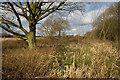 SE7836 : Pond near Arglam by Paul Harrop