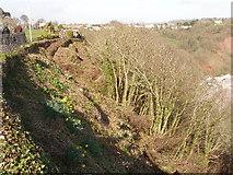 SX9265 : Tree clearance below Babbacombe Downs by David Hawgood