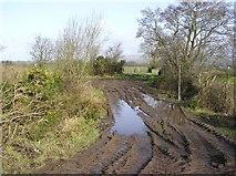 H5071 : Muddy Lane, Recarson by Kenneth  Allen