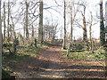 SP9452 : Copse near Turvey Abbey by Stephen Craven