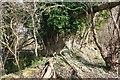 SU4190 : Trees on the side by Bill Nicholls