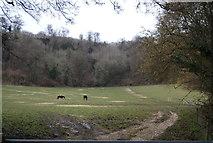 SU7431 : Horses below Noar Hill Hanger by N Chadwick