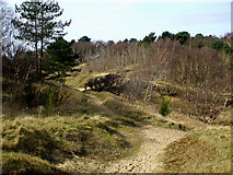 SD2707 : Pinewoods in Formby. by stan lewis