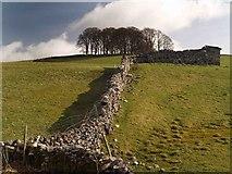 SD8172 : Yorkshire Dale's limestone wall by Steve  Fareham