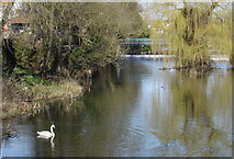 TM1246 : River Gipping at Bramford by Oxymoron