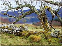 NH5533 : Near Corryfoyness farm by sylvia duckworth
