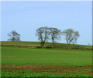 ST6161 : 2009 : Farmland and trees near Stanton Wick by Maurice Pullin
