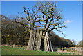 SU7537 : Poles leaning against an Oak Tree by N Chadwick