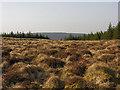 SN8677 : Cistfaen's summit plateau by Nigel Brown