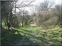 ST6601 : The bridleway up on to Giant Hill by Simon Palmer