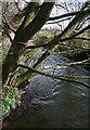 SJ6147 : River Weaver west of Paradise Bridge by Espresso Addict
