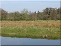 SU9947 : The spire of Shalford church from the W bank of the River Wey Navigation by Nick Smith