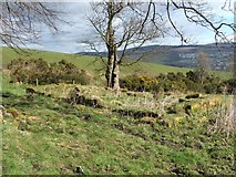 NS3779 : Ruins of Carman Cottage by Lairich Rig