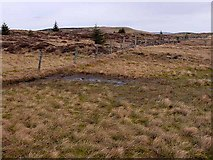 NT7705 : A boggy section of the Pennine Way by Oliver Dixon