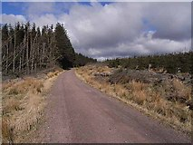 NT8909 : Forestry road near Wholehope Knowe by Oliver Dixon