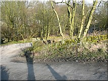 SE0726 : Greenroyd Lane, Ovenden by Humphrey Bolton
