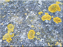 NU0052 : Lichen and fossils by Barbara Carr