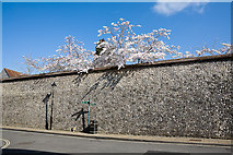 SU4829 : Spring blossom over the wall of Winchester Cathedral Close by Peter Facey