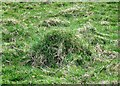 SP9313 : Meadow Ants Nest, College Lake by Chris Reynolds