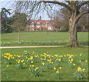 TM1645 : Christchurch Park in spring by Andrew Hill