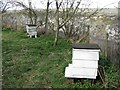 SP9314 : College Lake: Beehives in the Wildflower Garden by Chris Reynolds