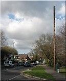 SY9897 : Mysterious pole, Corfe Mullen by John Palmer