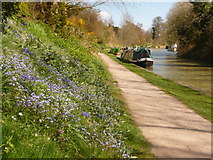 SU0061 : Devizes: Kennet & Avon Canal by Chris Downer