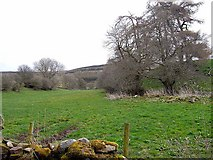 NY5549 : Valley of Newbiggin Beck by Oliver Dixon