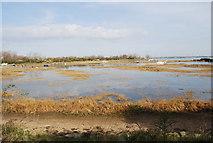 TQ8068 : Sharp's Green Bay by N Chadwick