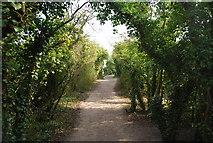 TQ8068 : Saxon Shore Way by N Chadwick