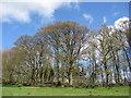 SK2265 : Footpath view of trees in Baltic Wood by Alan Heardman
