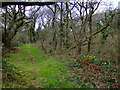 SM9228 : Oaks and daffodils by ceridwen