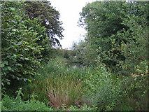 SP7219 : Pond near Upper South Farm 2 by Andy Gryce