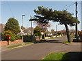 SZ2393 : Barton on Sea: postbox № BH25 202, Seacroft Avenue by Chris Downer