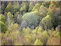 NH6751 : Craigiehowe Wood by Julian Paren