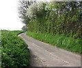 TG0922 : Tall hedge beside rural lane by Evelyn Simak