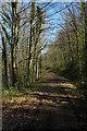 ST3993 : Usk Valley Walk, Bertolau Graig by Philip Halling