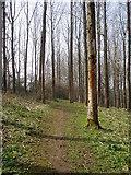ST3000 : Footpath through woods near Weycroft Hall by Peter Holmes