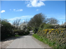 SH3490 : White thorn  in blossom in the roadside hedgerows at the entrance to the Llyn Llygeirian Causeway by Eric Jones