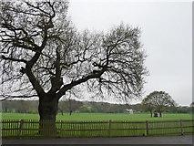 TQ3473 : Cricket ground, Dulwich Common by Chris Gunns