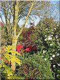 SO6892 : Gardens Open scheme by Carol Walker