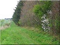 SU1420 : Bridleway to Gallows Hill by Maigheach-gheal